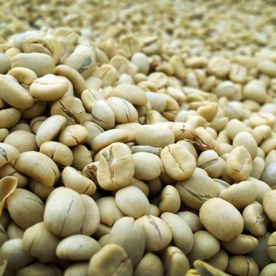Crown Analysis: CJ1111 - Colombia Trujillo Buenos Aires Fully Washed Geisha Peaberry Crown Jewel